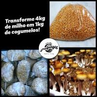 Kit completo de cultivo de cubensis!